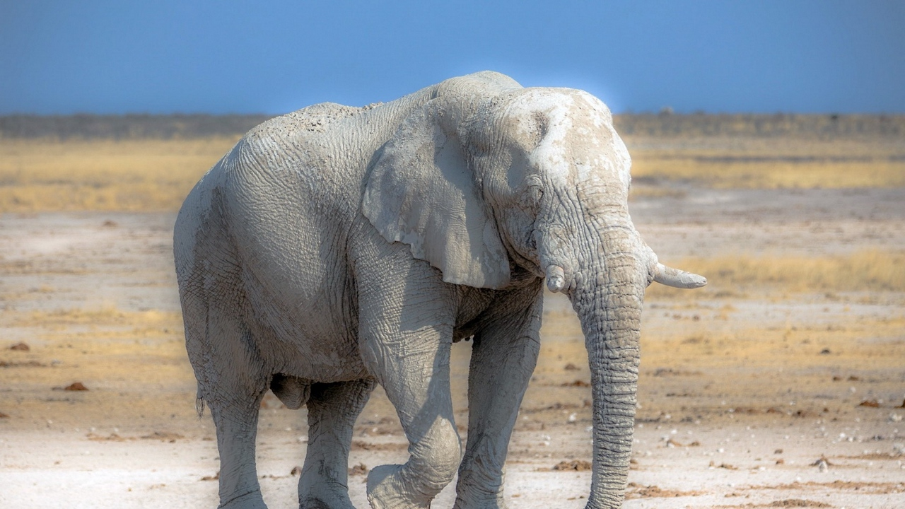 Preview wallpaper africa, elephant, nature