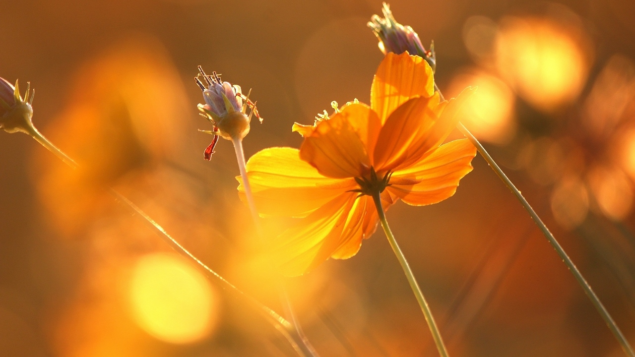 Preview wallpaper autumn, flowers, glare, stems