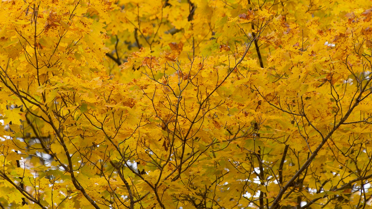 Preview wallpaper autumn, leaves, nature, tree, yellow