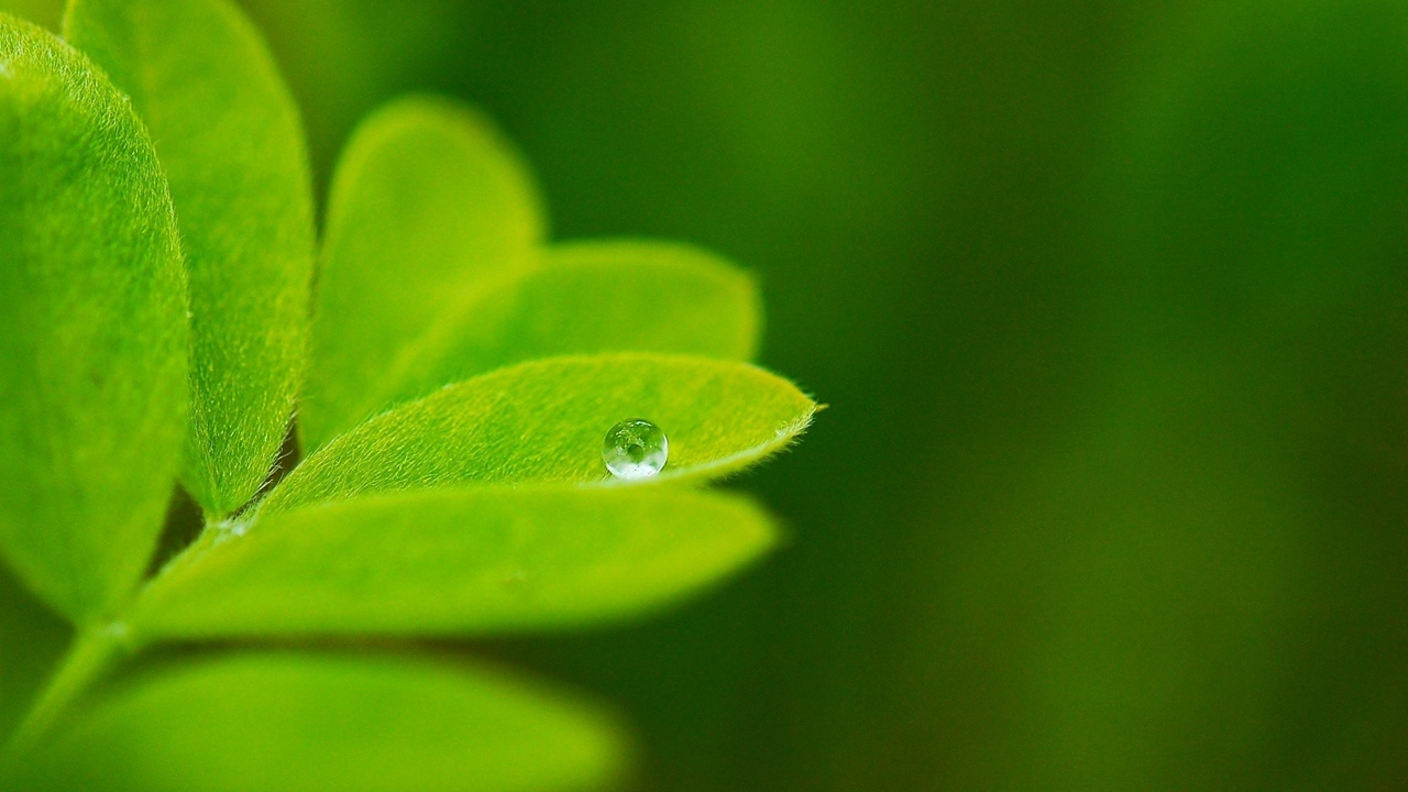 Preview wallpaper background, greenery, leaves, plants