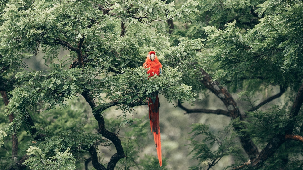 Preview wallpaper bird, exotic, macaw, parrot