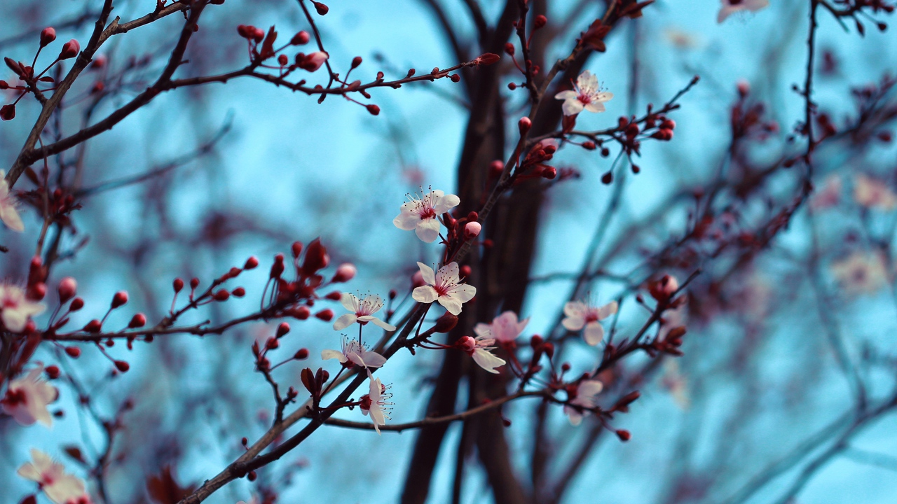 Preview wallpaper bloom, branches, cherry, flowers, spring