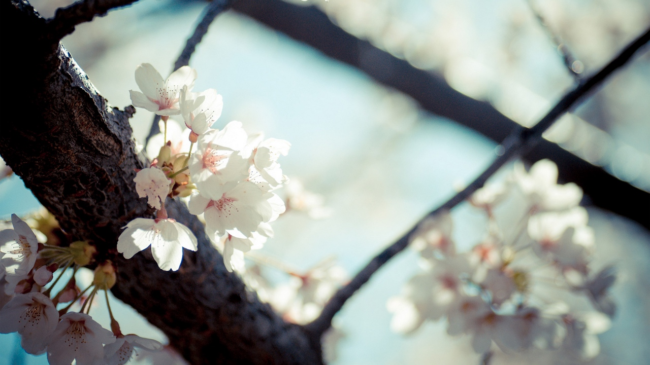 Preview wallpaper bloom, branches, flowers, macro, spring