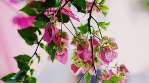 Preview wallpaper bloom, flowers, pink, plant, summer