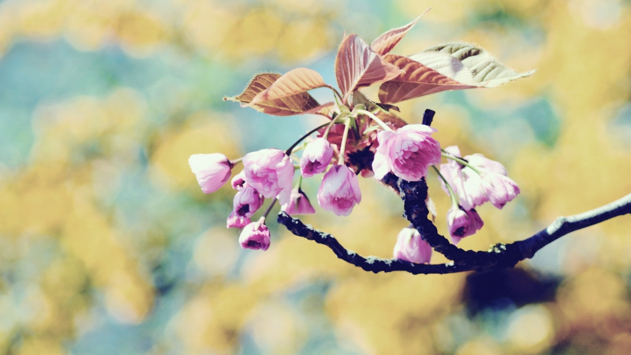 Preview wallpaper bloom, branch, plant, spring