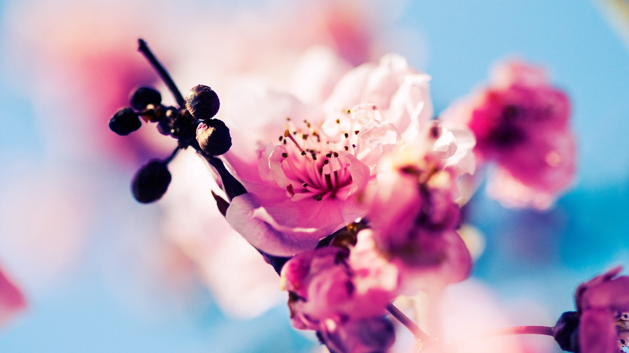 Preview wallpaper blooming, flowers, reflections, sky, spring