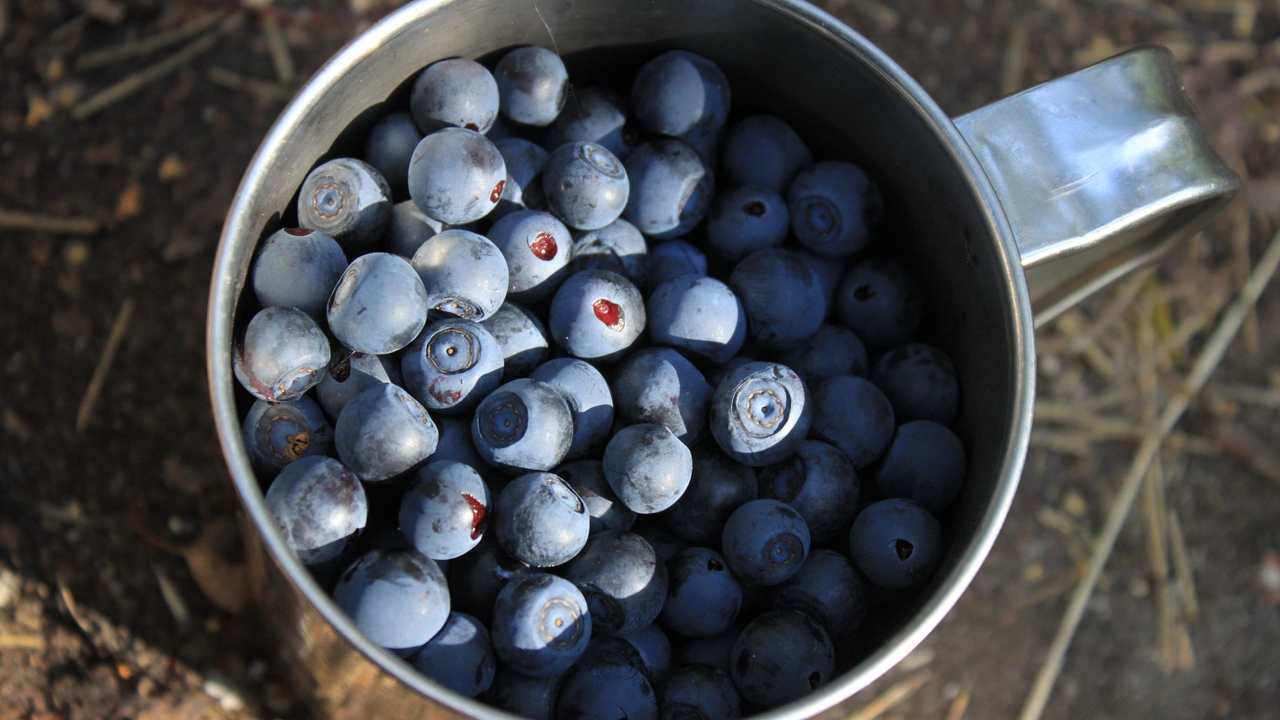 Preview wallpaper berries, blueberries, cup
