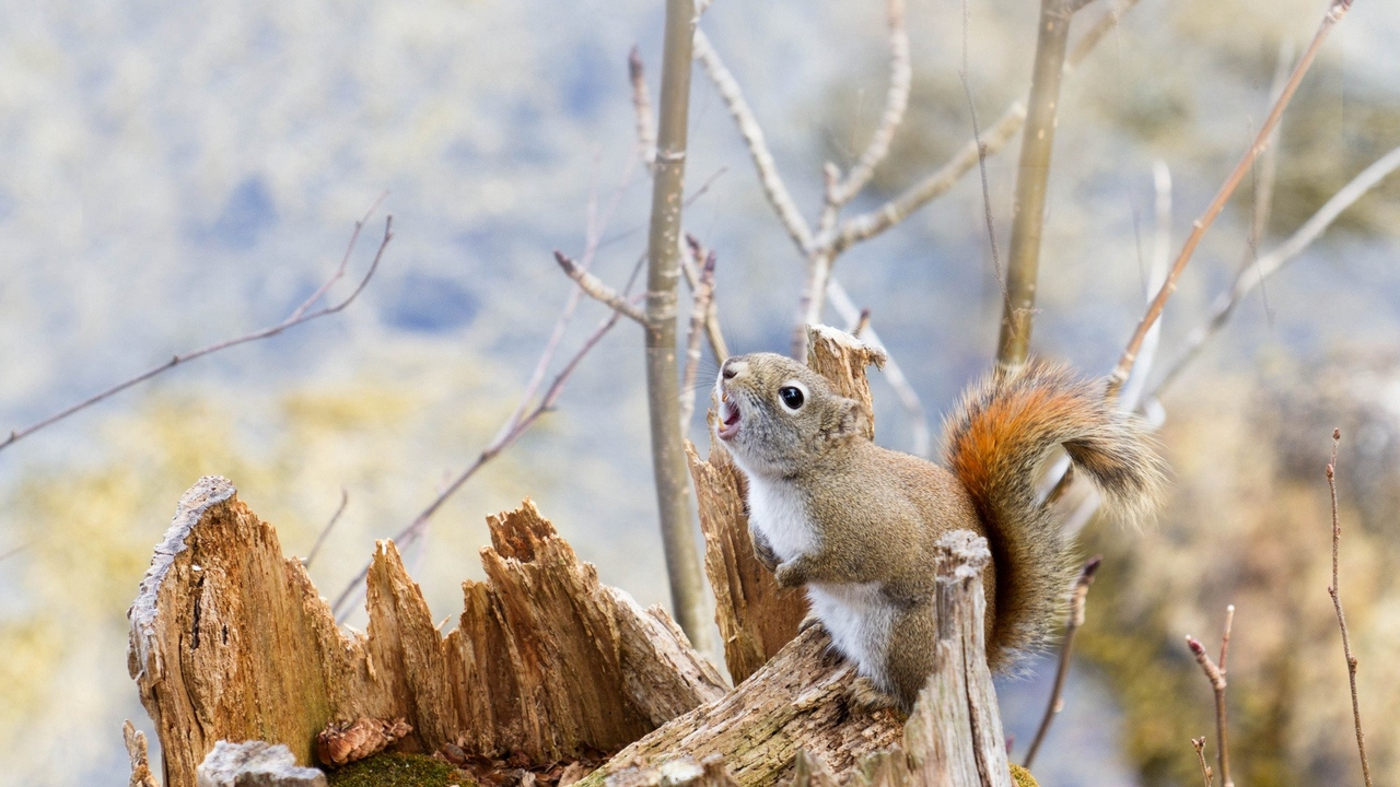 branches tree squirrel food
