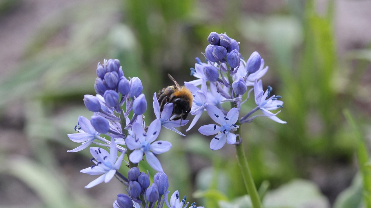 Preview wallpaper bumble bee, flower, insect, plant