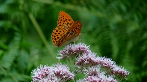 Preview wallpaper butterfly, close-up, flower, insect