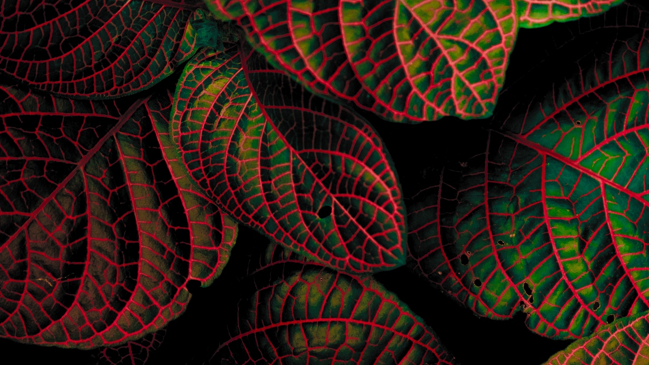 Preview wallpaper carved, contrast, leaves, plant