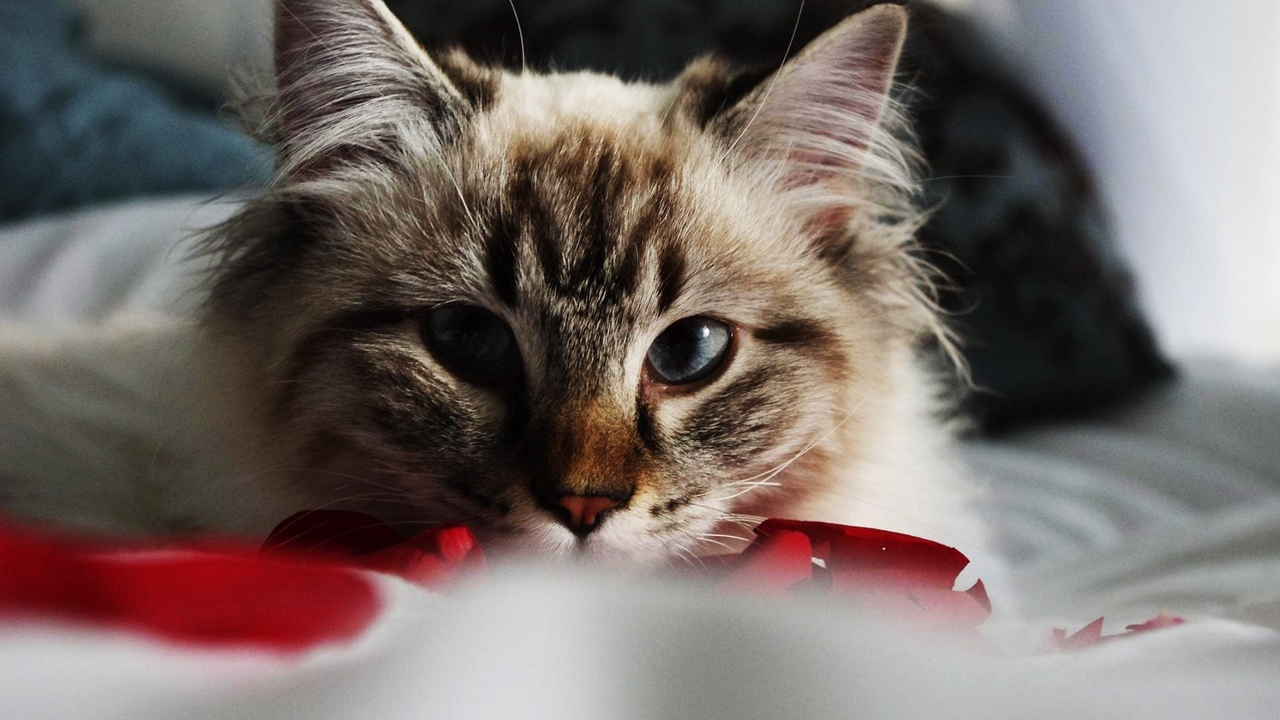 Preview wallpaper cat, eyes, furry, look, muzzle