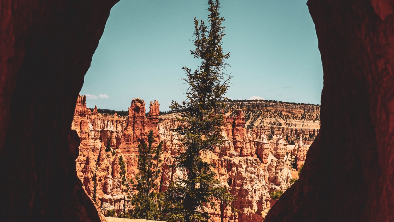 Preview wallpaper canyon, cave, cliff, rocks, tree