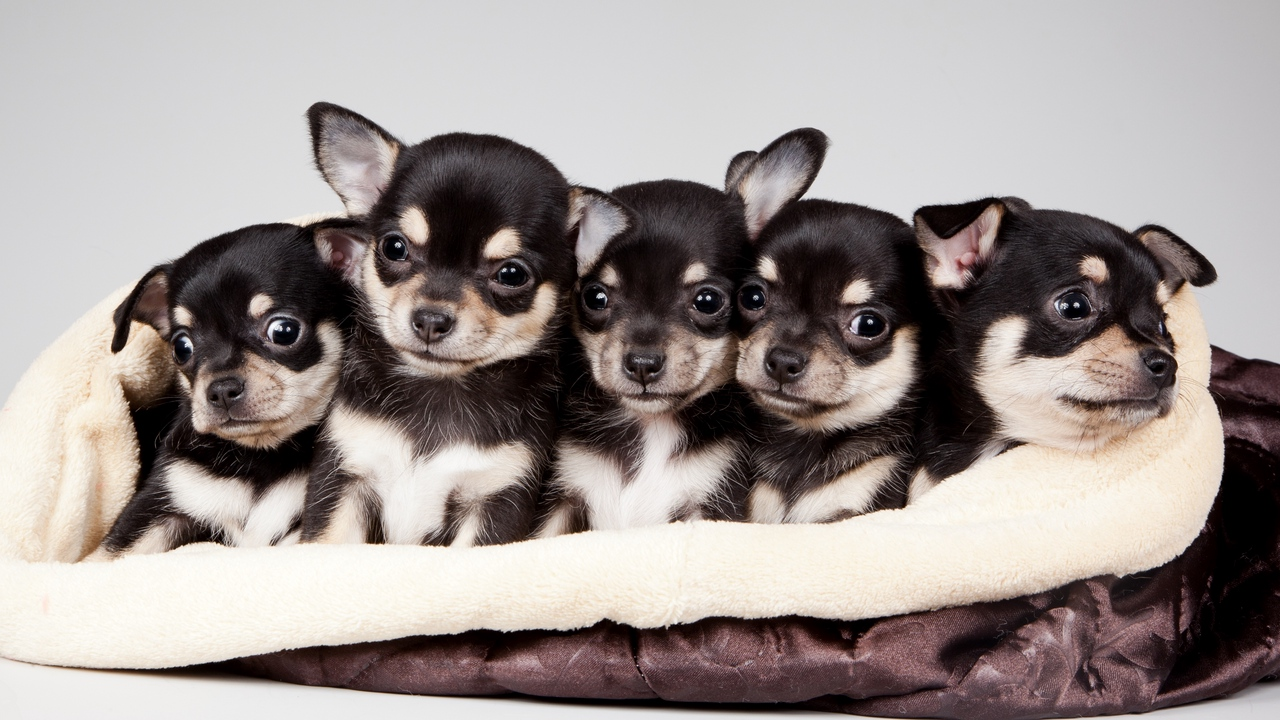 Preview wallpaper 2015, celebrity pet and home life style, national puppy day