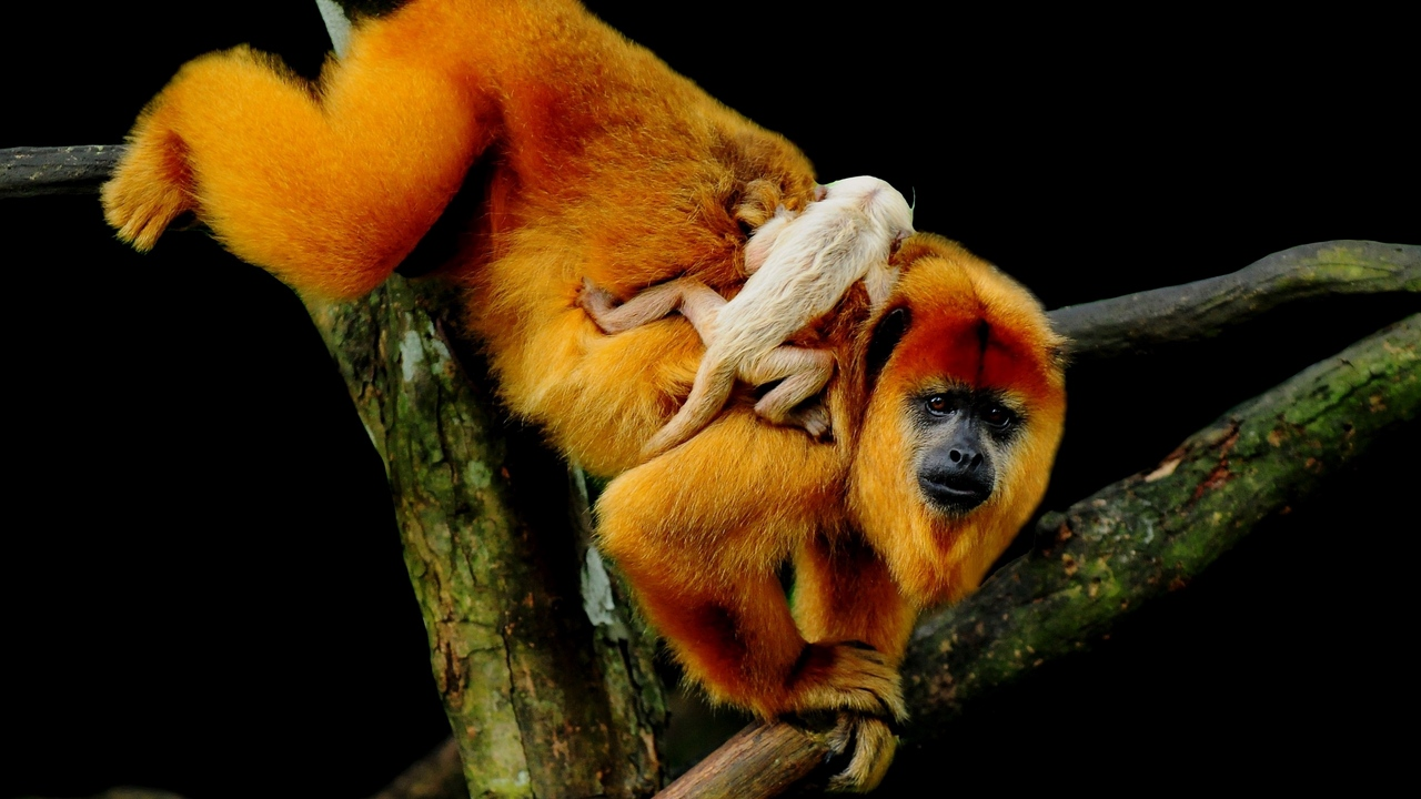 Preview wallpaper baby, climbing, monkey, tree