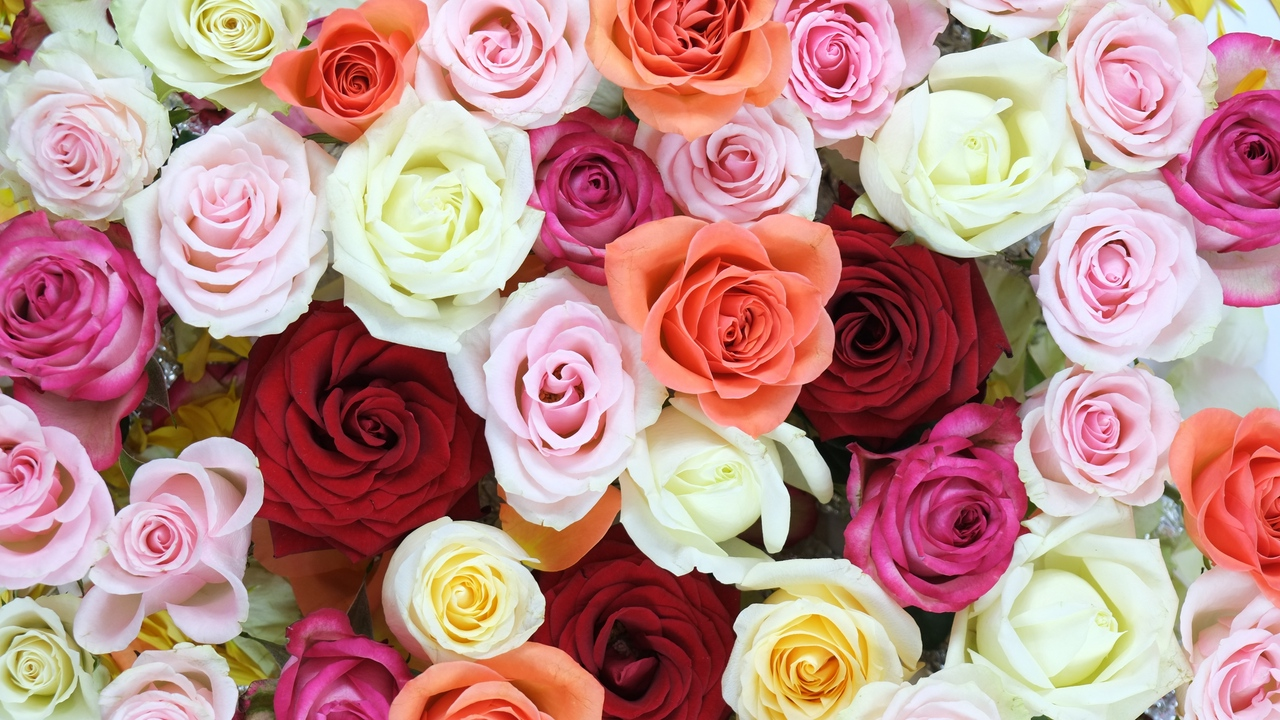 Preview wallpaper colorful, flowers, roses