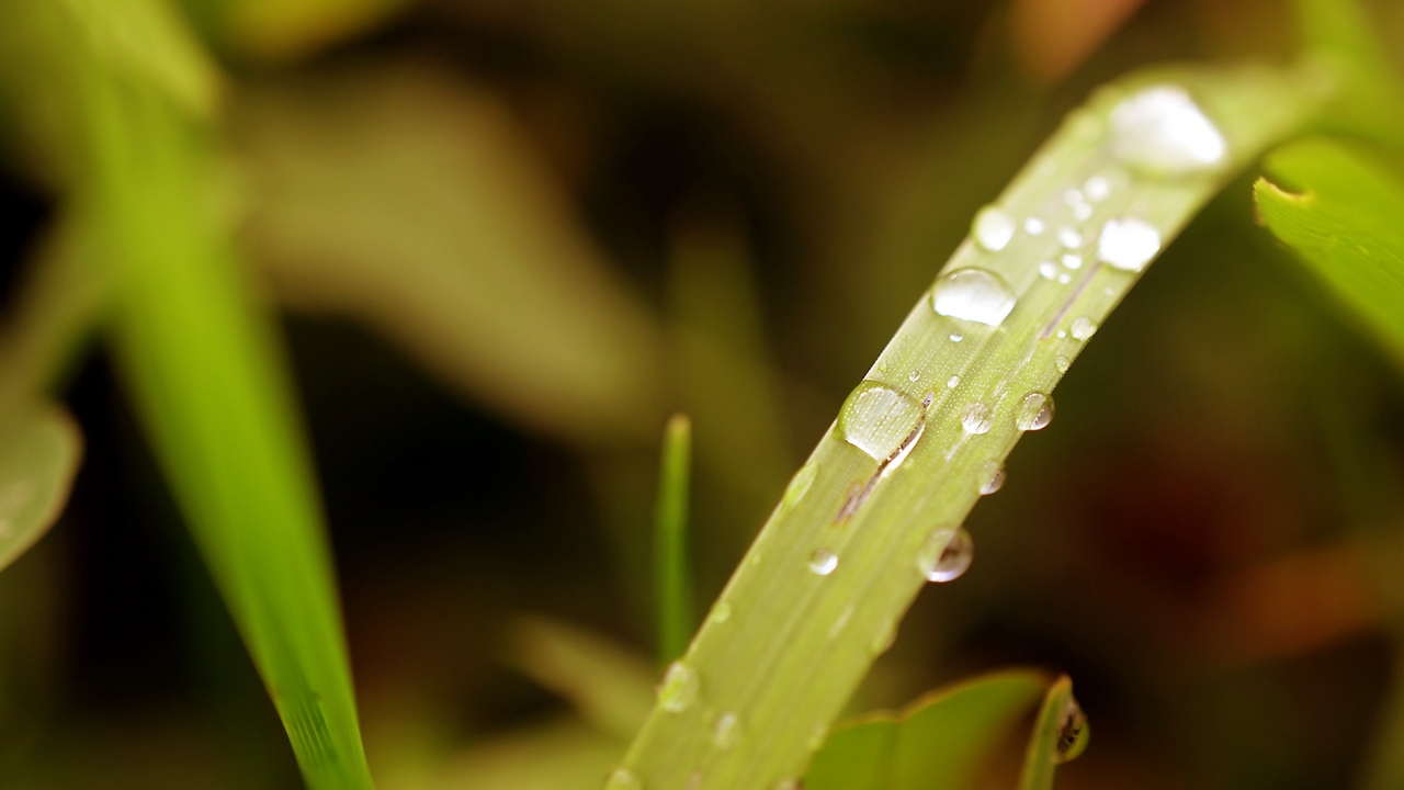 Preview wallpaper dew, drops, grass, plant, surface
