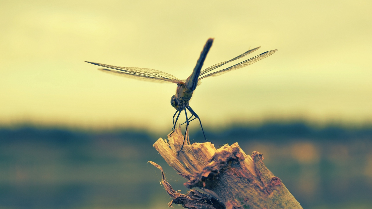 Preview wallpaper dragonfly, flight, insect, wood
