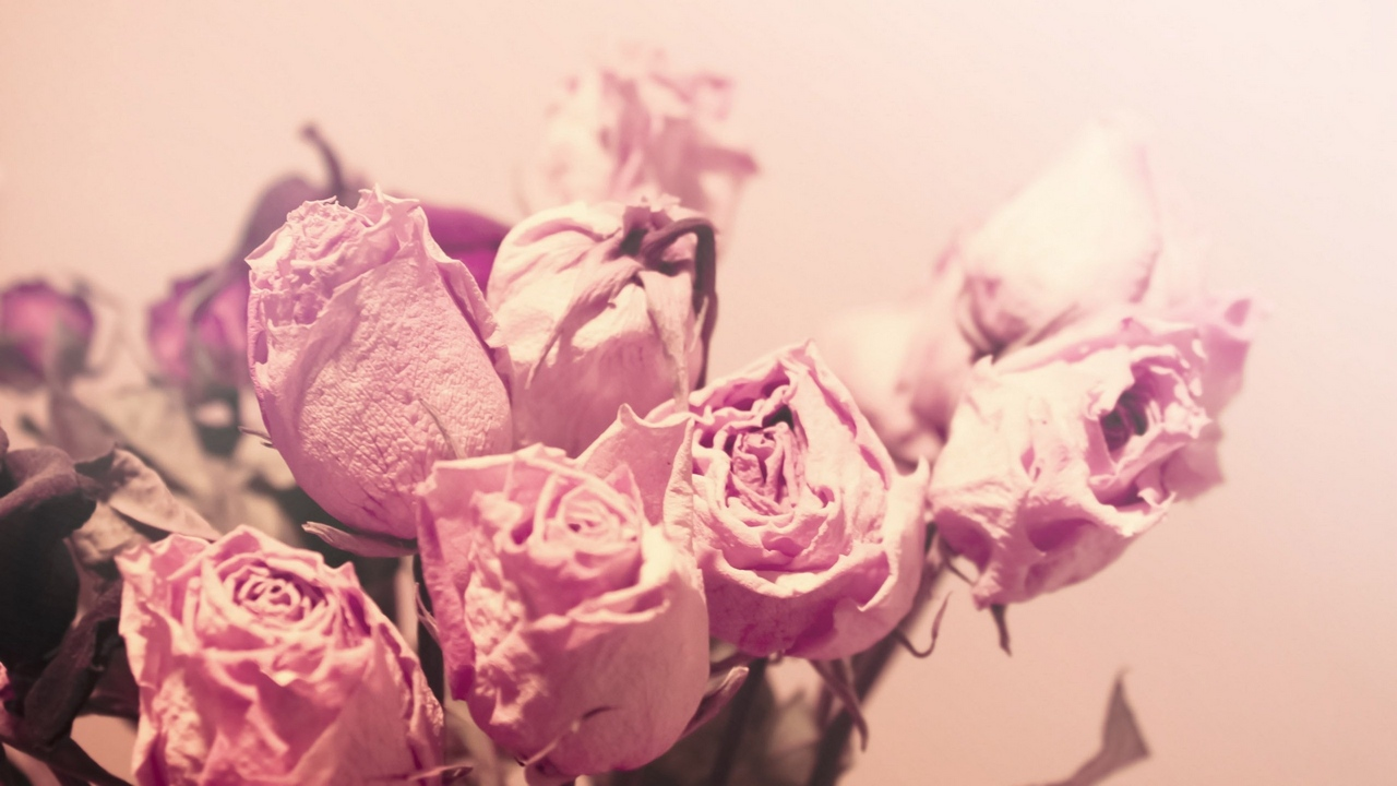 Preview wallpaper buds, dried, flowers, roses, sweet