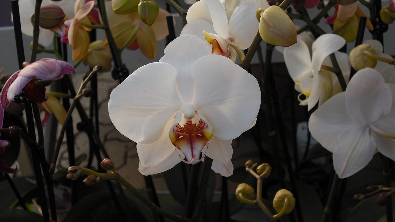 exotic orchids branches flowers