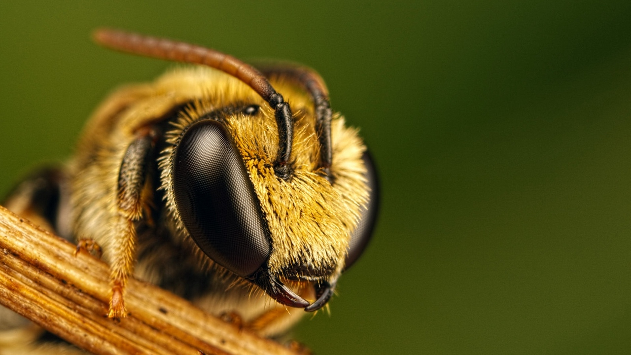 Preview wallpaper bee, eyes, fly, insect