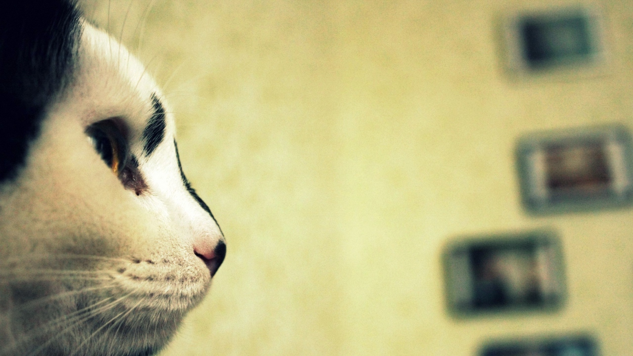 Preview wallpaper cat, face, profile, spotted