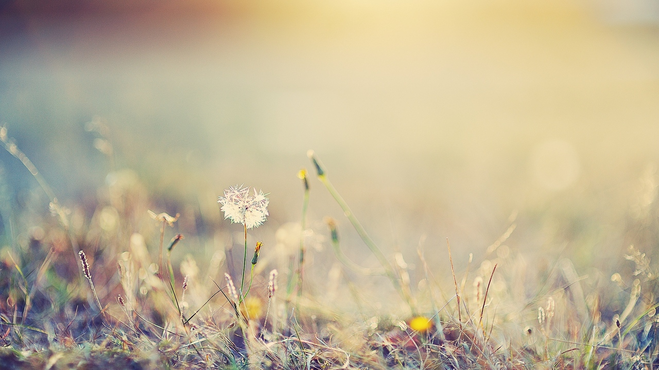 Preview wallpaper bright, flowers, glare, grass