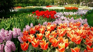 Preview wallpaper flowerbed, flowers, hyacinths, park, spring, tulips
