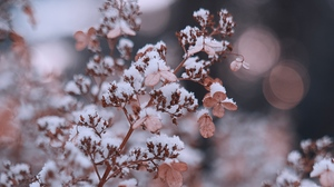 Preview wallpaper branches, flowers, macro, plant, snow