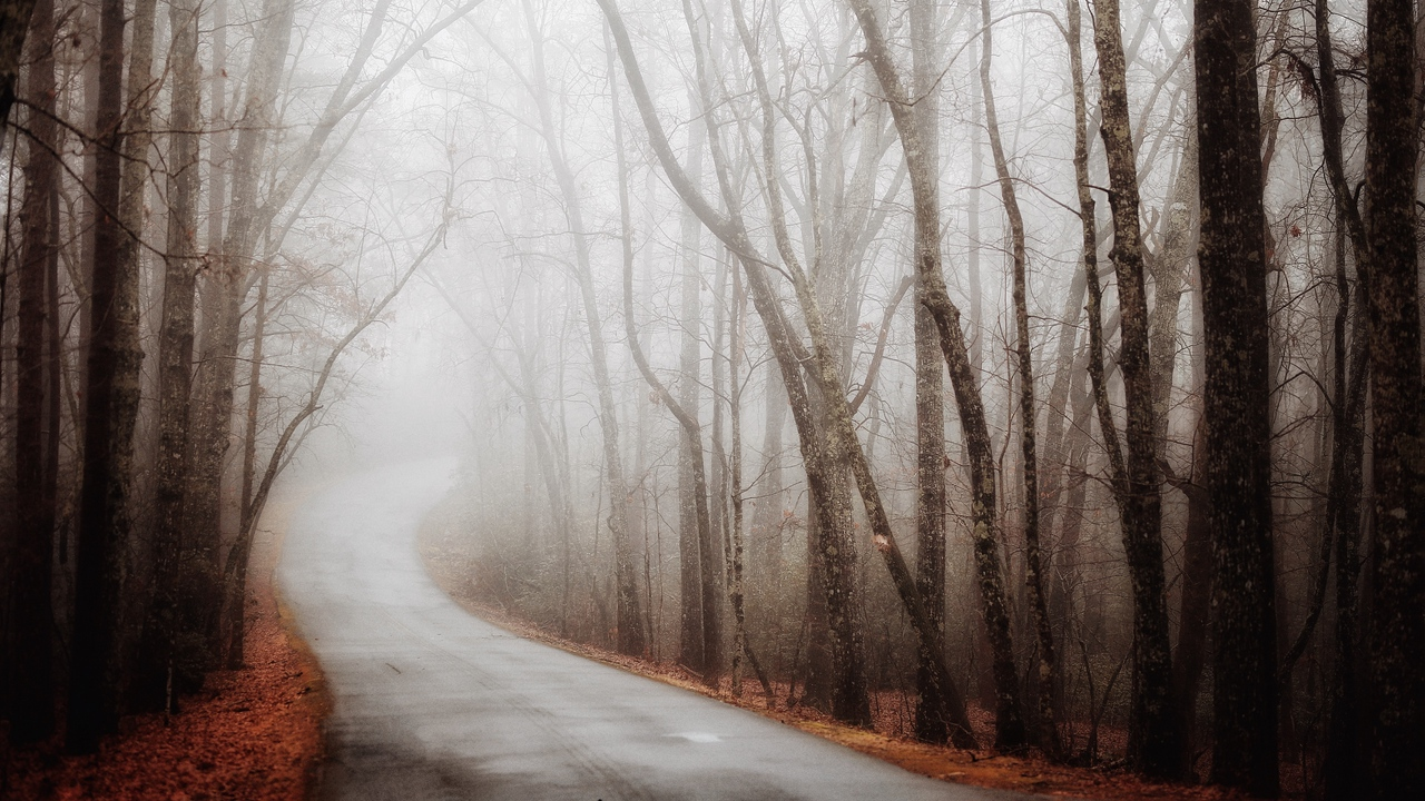 Preview wallpaper autumn, fog, forest, road, turn
