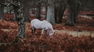 Preview wallpaper forest, grass, pony, trees, walk