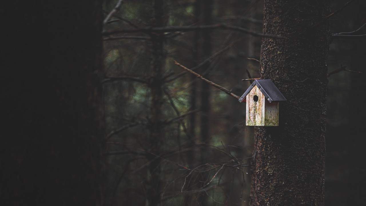 Preview wallpaper birdhouse, forest, nature, tree