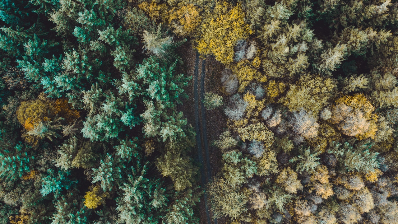 Preview wallpaper aerial view, forest, overview, road, trees