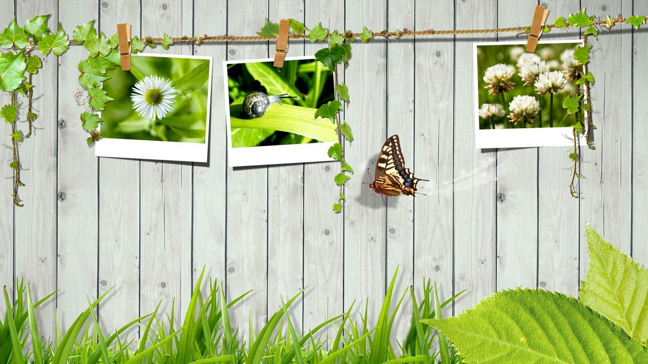 Preview wallpaper butterfly, fence, grass, leaves, photo cards