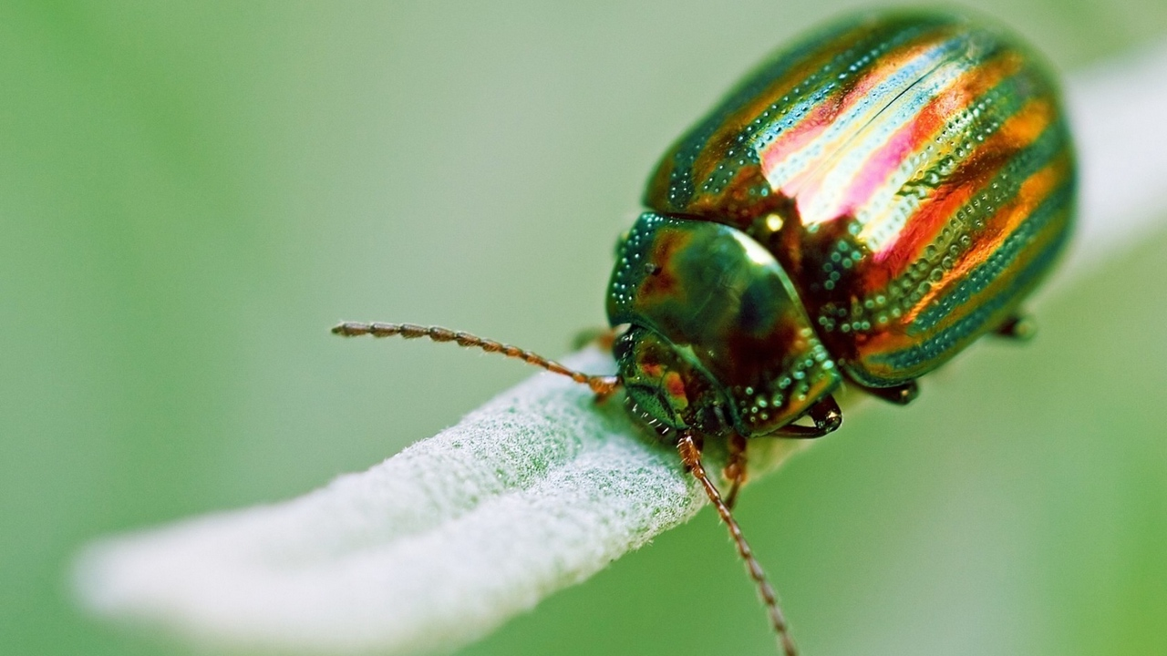 Preview wallpaper beetle, golden, green, insect, macro