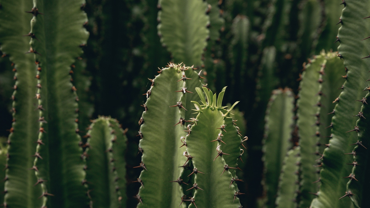 Preview wallpaper cactus, deserted, green, plant, spiny