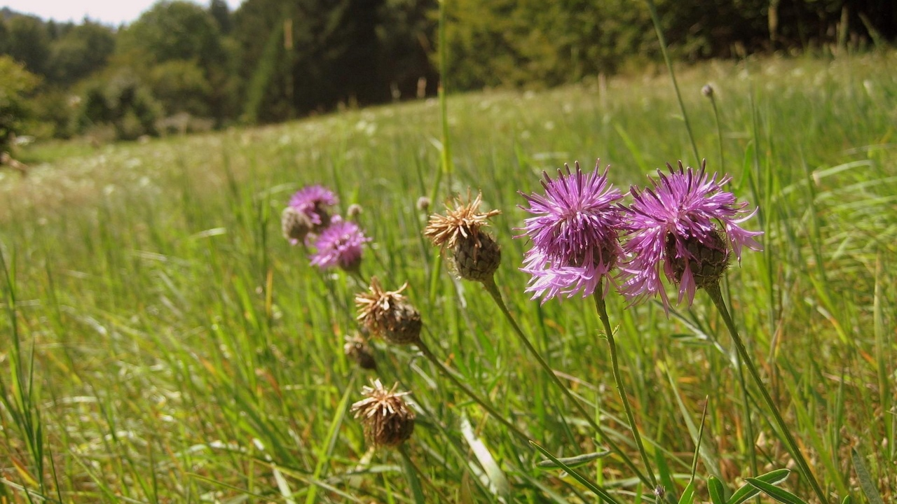 Preview wallpaper flowers, green, meadow, summer, sunny