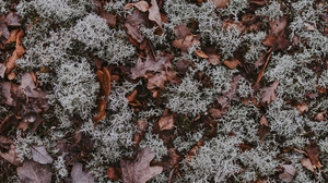 Preview wallpaper autumn, dry, fallen, ground, leaves, moss