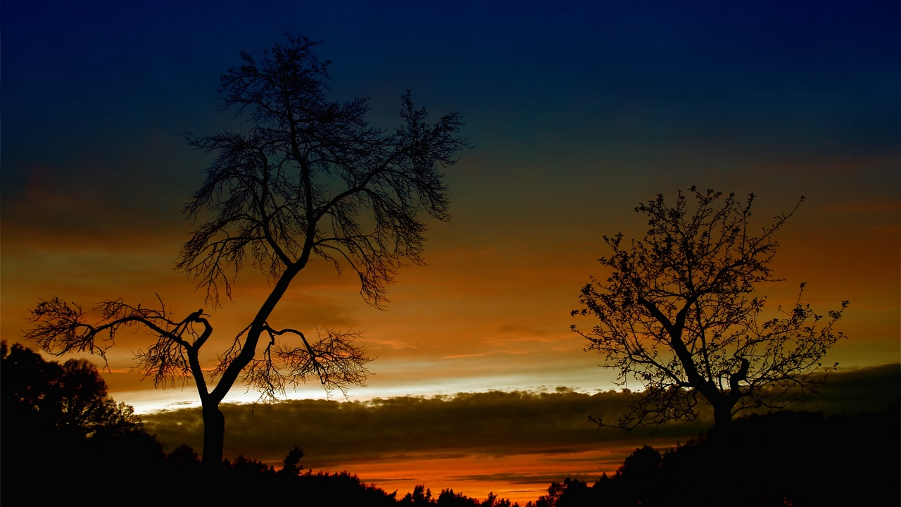 Preview wallpaper bends, branches, clouds, decline, evening, height, orange, outlines, sky, trees, twilight