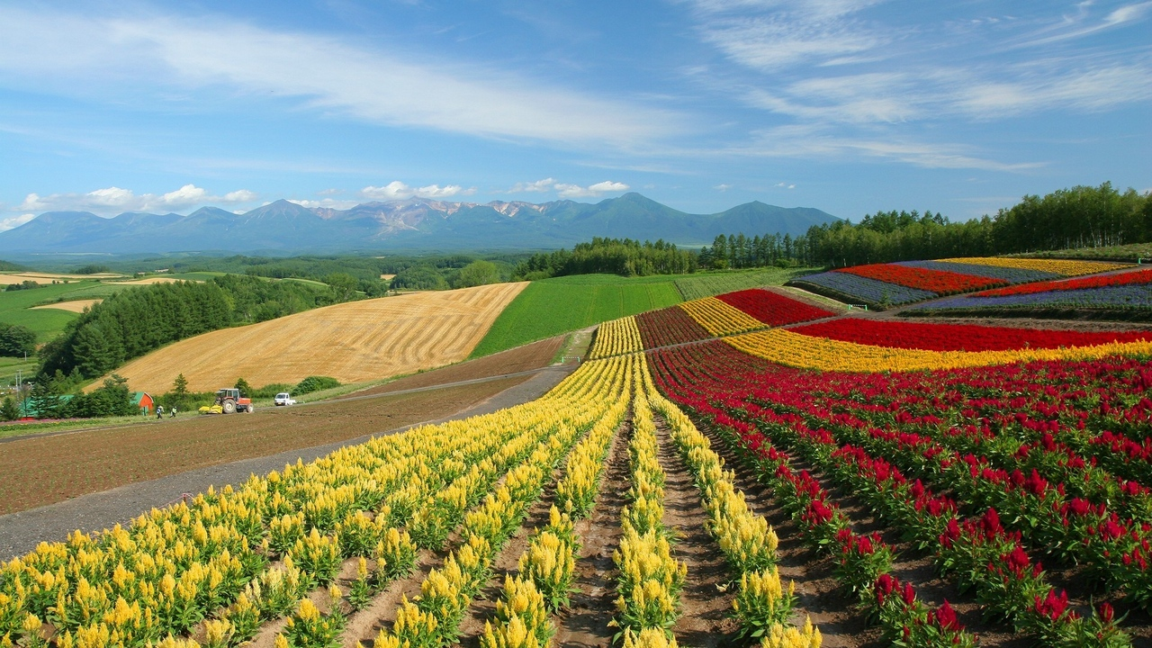 Preview wallpaper field, flowers, japan, multi-colored, ranks