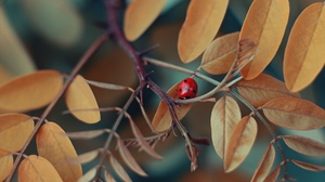 Preview wallpaper branch, insect, ladybug, leaves, macro
