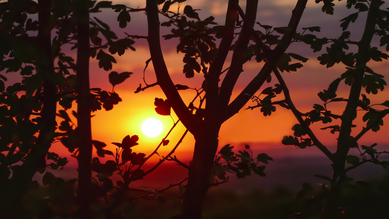 Preview wallpaper branches, leaves, sunset