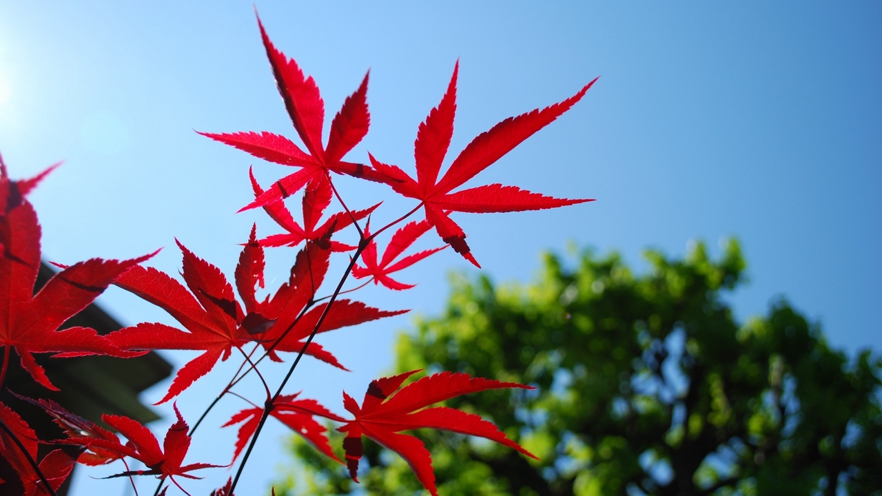 Preview wallpaper blue, leaves, red, sky, trees