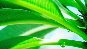 Preview wallpaper drop, green, leaves, light, plant