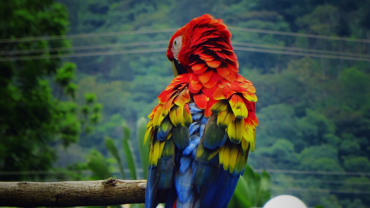 Preview wallpaper bird, color, feathers, macaw, parrot