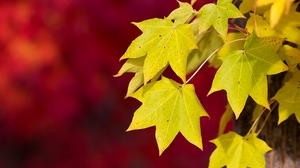 Preview wallpaper autumn, background, foliage, macro, red