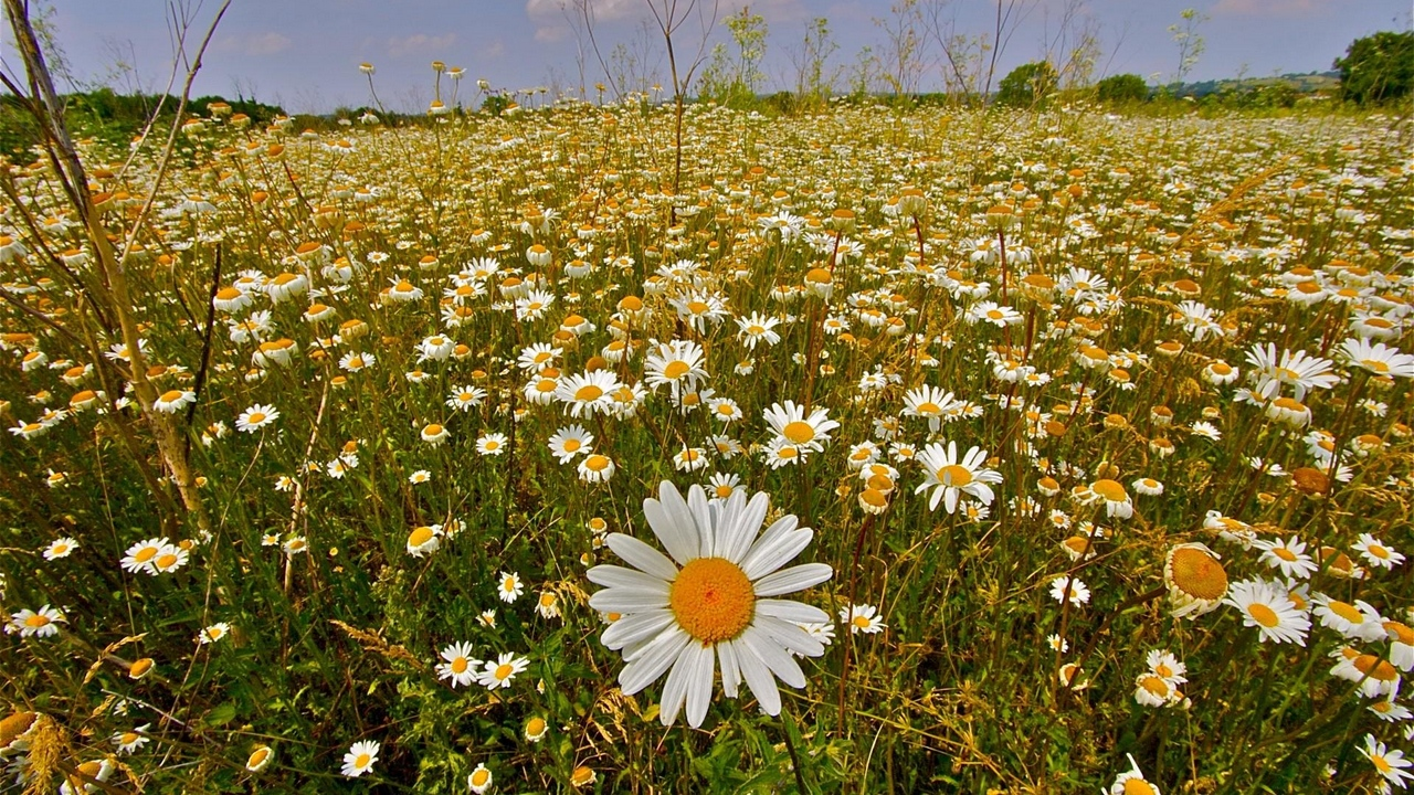 Preview wallpaper clouds, daisies, meadow, nature, sky, summer