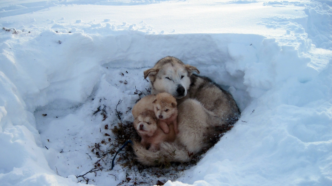 mud homeless snow puppies care dogs