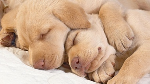 Preview wallpaper kids, muzzle, puppies, sleeping