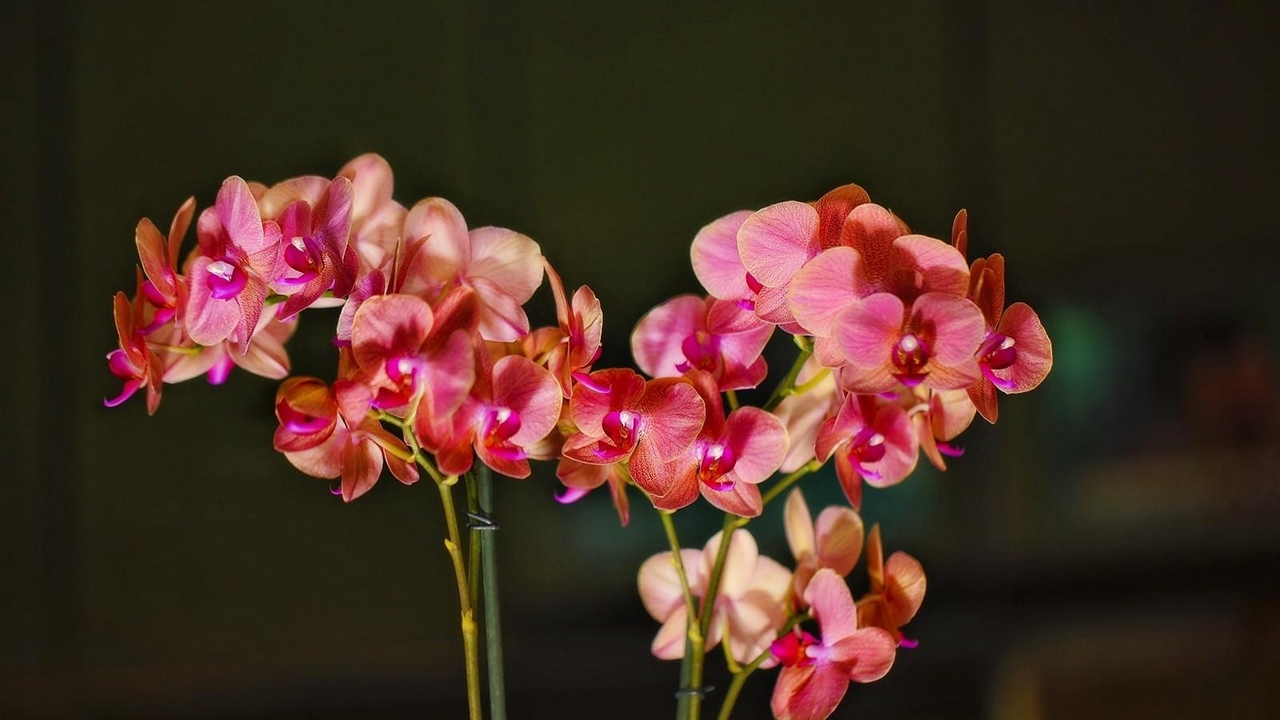 Preview wallpaper bloom, branches, exotic, orchid